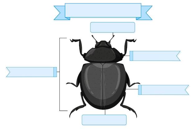Лист внешней анатомии жука