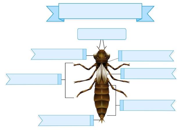 Внешняя анатомия нимфы стрекозы.