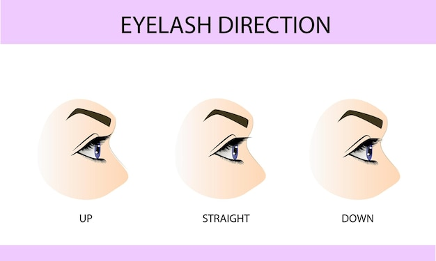 Eyelash growth types, up, down and straight, information for eyelash extension