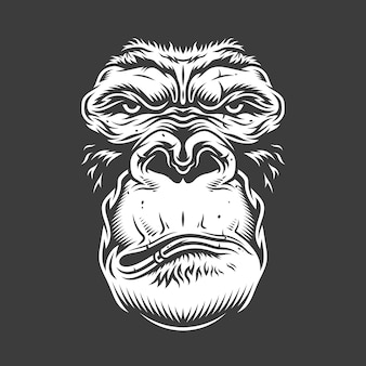 Face of gorilla  on white