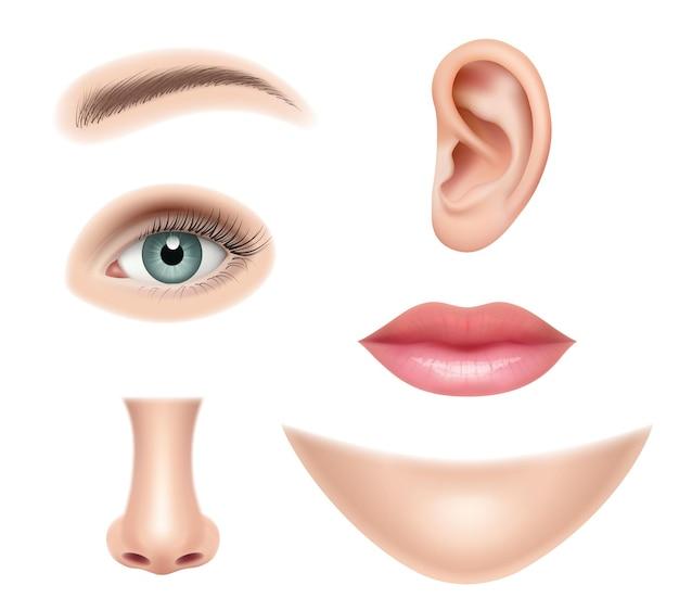 현실적인 얼굴. 인간의 부분 코 머리 눈 입 벡터 그림 컬렉션 집합입니다. 인간의 코와 입, 감각 기관 세부 그림
