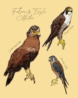 Falcon and eagle hand draw sketch .