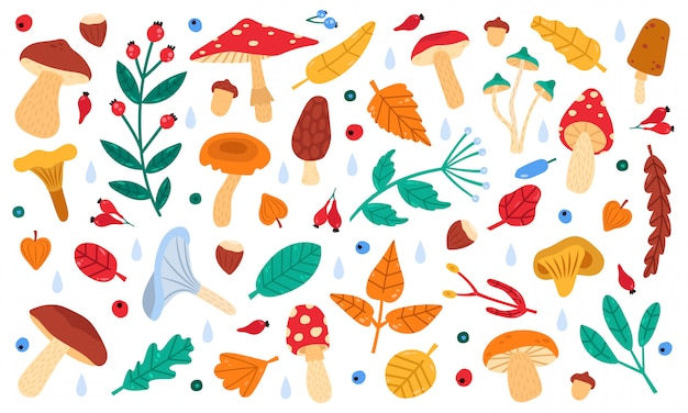 Fall botanical decor. autumn doodle forest leaves, flowers, berries and mushrooms, botany fall season collection  illustration icons set. autumn forest drawing, branch and mushroom