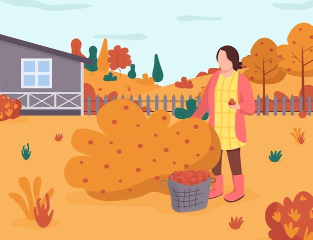 秋の庭のセミフラットイラスト。女性は茂みからベリーを取ります。裏庭での秋の収穫。田舎のレクリエーション。商業用の女性の庭師2d漫画のキャラクター