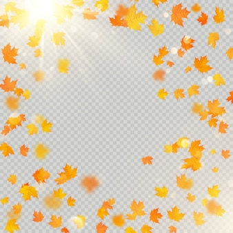 Fall maple leaves frame with delicate sun for decoration. autumn leaves