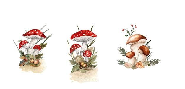 Осенние грибы акварелью