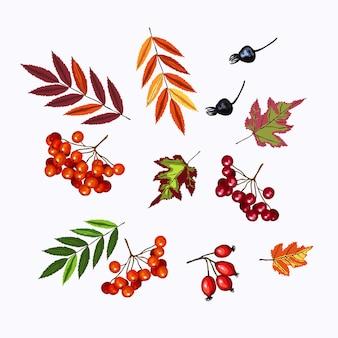 秋のナナカマド、ガマズミ属の赤いベリーと緑、オレンジ、赤い葉ハロウィーン、感謝祭、秋のシンボル。