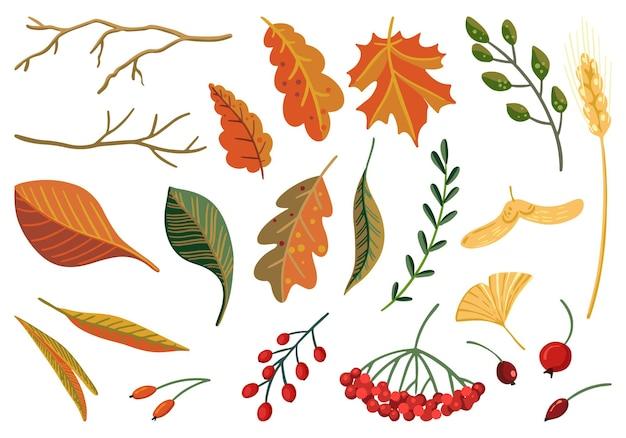 가을 세트입니다. 가을의 벡터 일러스트입니다. 식물 요소, 잎, 열매, 가지의 그림. 만화 컬러 클립 아트 컬렉션 흰색 절연입니다. 장식, 스티커, 디자인, 카드, 지문용.