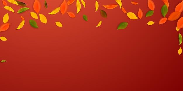 落ち葉。赤、黄、緑、茶色の混沌とした葉が飛んでいます。見栄えの良い赤い背景に降る雨のカラフルな葉。学校に戻って美しいセール。