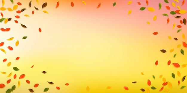 떨어지는 단풍. 빨강, 노랑, 녹색, 갈색 혼란스러운 나뭇잎이 날아갑니다. 흰색 배경을 가져오는 비네트 화려한 단풍입니다. 매력적인 백투스쿨 세일.
