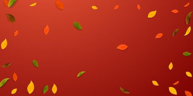 落ち葉。赤、黄、緑、茶色の混沌とした葉が飛んでいます。人気の赤い背景の上のビネットカラフルな葉。学校に戻って美しいセール。