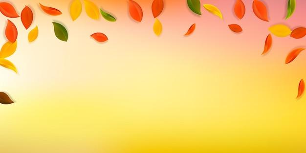 落ち葉。赤、黄、緑、茶色のきちんとした葉が飛んでいます。見事な白い背景に降る雨のカラフルな葉。魅力的な新学期セール。