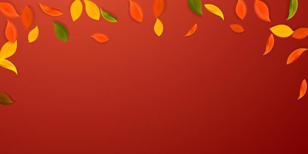 落ち葉。赤、黄、緑、茶色のきちんとした葉が飛んでいます。価値のある赤い背景に降る雨のカラフルな葉。学校のセールに戻って魅了します。