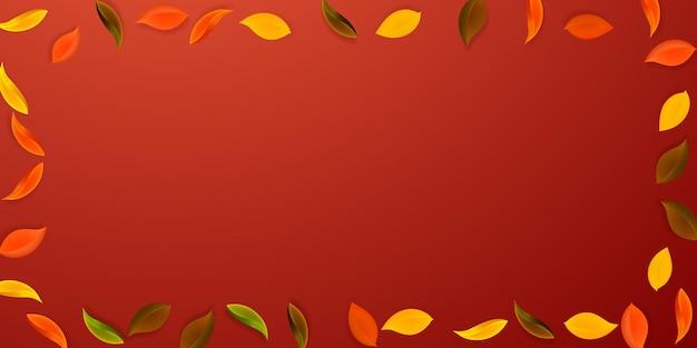 落ち葉。赤、黄、緑、茶色のきちんとした葉が飛んでいます。古典的な赤い背景にカラフルな葉をフレームします。魅力的な新学期セール。