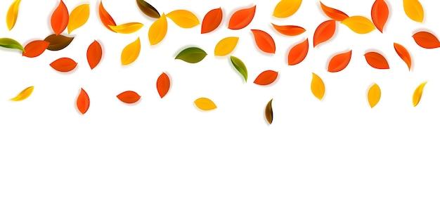 落ち葉。赤、黄、緑、茶色のきちんとした葉が飛んでいます。まばゆいばかりの夕日の背景にグラデーションのカラフルな葉。魅力的な新学期セール。