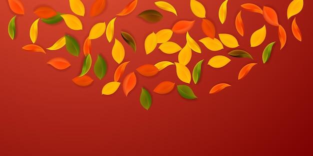 落ち葉。赤、黄、緑、茶色のきちんとした葉が飛んでいます。ゴージャスな赤い背景の上の半円のカラフルな葉。魅力的な新学期セール。