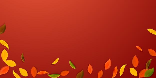 떨어지는 단풍. 빨강, 노랑, 녹색, 갈색 깔끔한 잎이 날아갑니다.