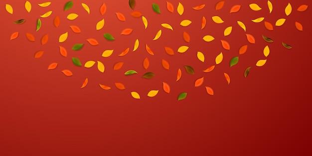 落ち葉。赤、黄、緑、茶色のランダムな葉が飛んでいます。壮大な赤い背景の上の半円のカラフルな葉。魅力的な新学期セール。