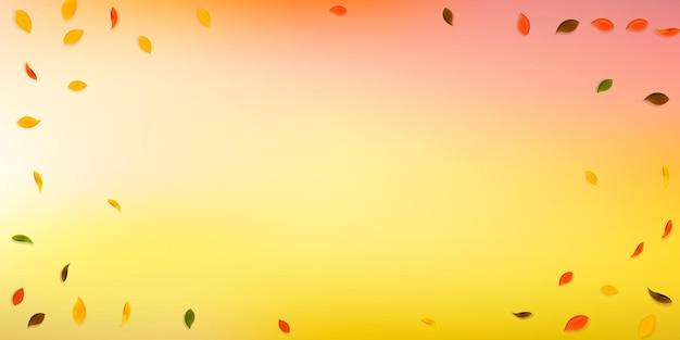 떨어지는 단풍. 빨강, 노랑, 녹색, 갈색 임의의 잎이 날아갑니다. 신선한 흰색 배경에 짤막한 화려한 단풍입니다. 매력적인 백투스쿨 세일.