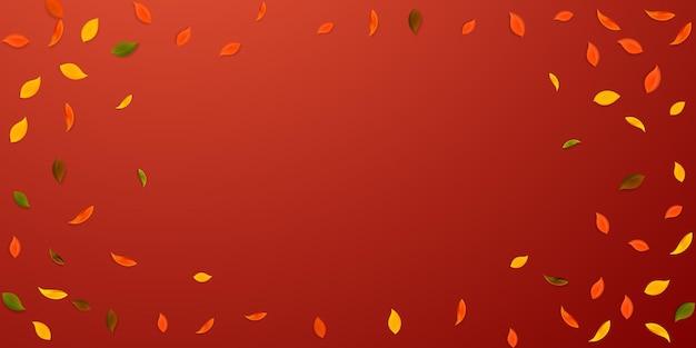 落ち葉。赤、黄、緑、茶色のランダムな葉が飛んでいます。崇高な赤い背景の上のビネットカラフルな葉。学校に戻って美しいセール。