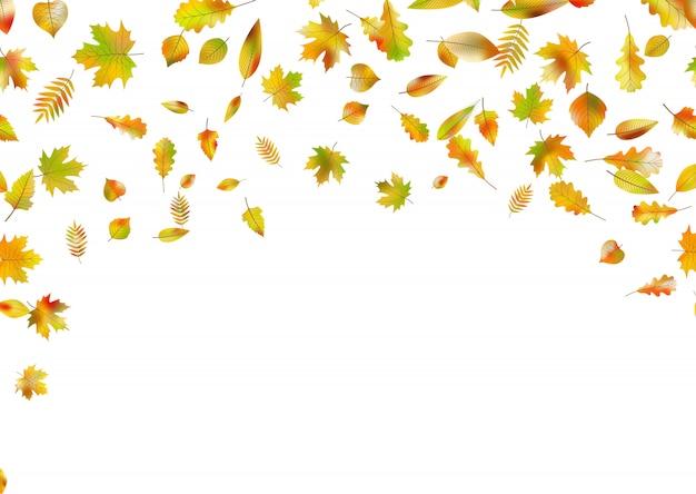 秋の落ち葉。