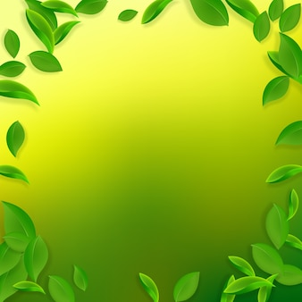 落ちてくる緑の葉。新鮮なお茶の混沌とした葉が飛んでいます。 Premiumベクター