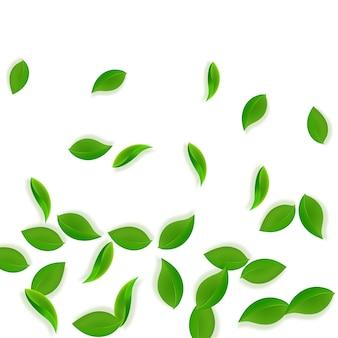 落ちてくる緑の葉。新鮮なお茶のきちんとした葉が飛んでいます。白い背景の上で踊る春の葉。愛らしい夏のオーバーレイテンプレート。珍しい春のセール。