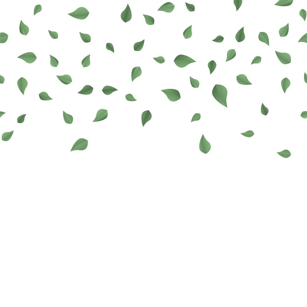 Падающие зеленые летние листья на белом фоне. вектор