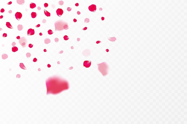 Falling pink rose petals isolated on white background. vector illustration with beauty rose petal, applicable for decoration of greeting cards for march 8 and valentine's day, mother's day. eps 10
