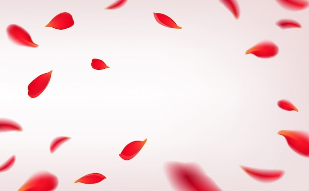 Falling red rose petals isolated on white background.  with beauty roses petals frame