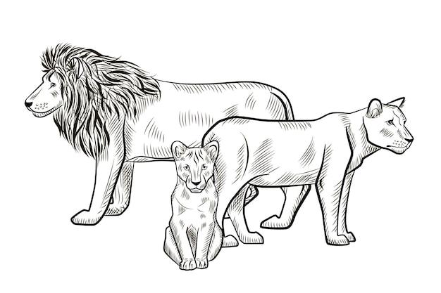 白い背景で隔離の家族のライオン。グラフィックライオン、雌ライオン、サバンナのカブ捕食者を彫刻スタイルでスケッチします。レトロな黒と白の図面をデザインします。ベクトルイラスト。