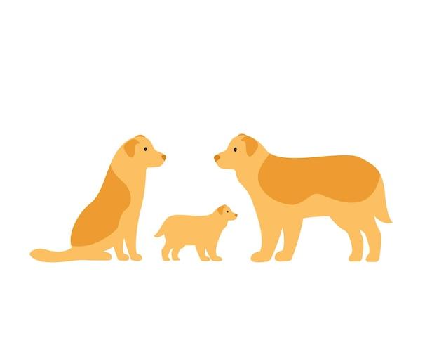 犬の家族。ボーダーコリーのお母さん、お父さんと子犬。