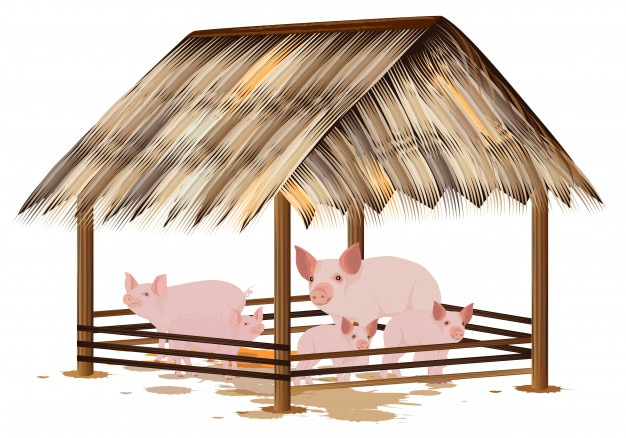 Family pig in corral vector design