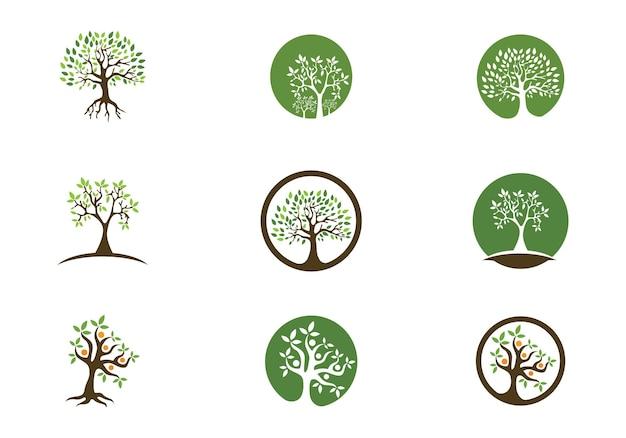 Семейное дерево логотип шаблон векторные иллюстрации
