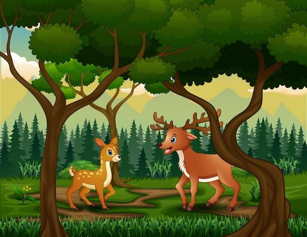 Семья диких оленей в лесном пейзаже