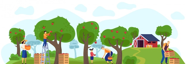 Family working in apple orchard together, farm garden  illustration
