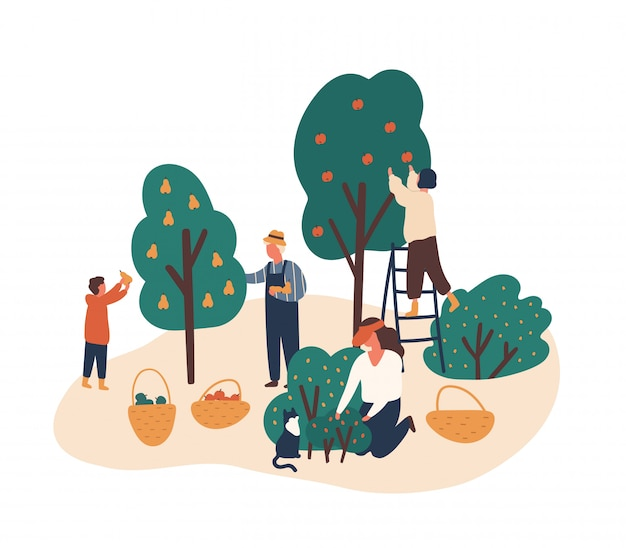 Family working in fruit garden together flat illustration. people gathering apples, berries and pears. grandfather, kids harvesting in backyard orchard characters isolated on white.
