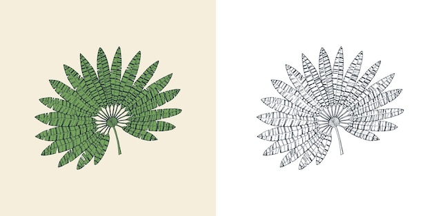 팬 야자수 식물 열대 또는 이국적인 잎과 잎 빈티지 고사리 새겨진 꽃 손으로 그린 식물