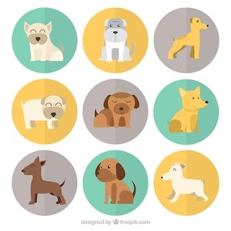 Фантастические собаки с различными породами