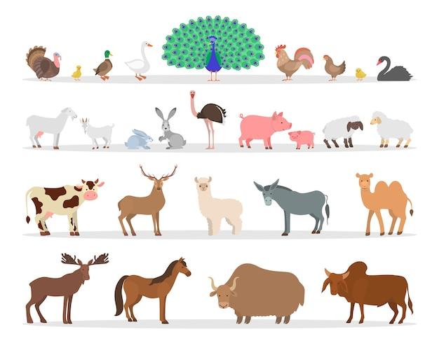 농장 동물과 새 세트. 국가 동물의 수집. 오리와 닭, 염소와 양. 이국적인 동물을 사육합니다. 삽화