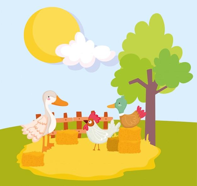 干し草と木の農場の動物アヒルのガチョウとオンドリのスタック