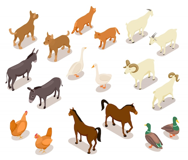 Домашний скот . лошадь и собака, кошка и гусь, курица и коза, баран и утка, осел. набор домашних животных