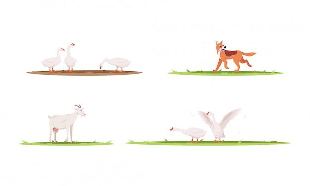 Набор полу плоских иллюстраций сельскохозяйственных животных. гуси на ранчо. собака играет на улице. коза для производства молока. домашний питомец для сельхозугодий коллекция 2d-персонажей мультфильмов для коммерческого использования