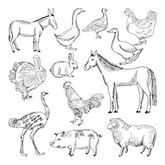 手描きのスタイルで設定された家畜。イラスト。動物農場のスケッチガチョウと子羊、豚と馬