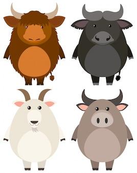 Farm animals on white background