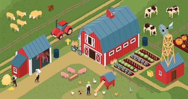 Composizione isometrica nel cortile dell'azienda agricola con il bestiame sui terreni agricoli dei maiali di casa di posa di pollo