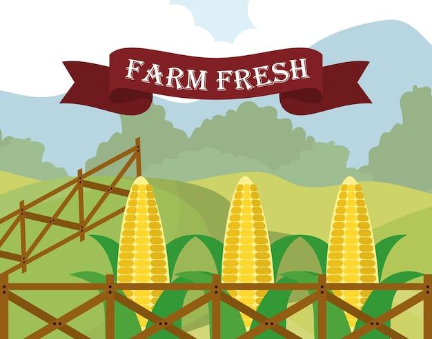 Ферма свежая кукурузная диета