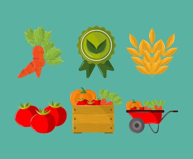 농장 신선한 농산물
