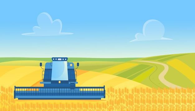 Комбайн фермы работает на уборке урожая пшеницы в сельской местности желтых зерновых полей сельскохозяйственных угодий