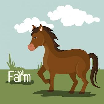 農場の自然とライフスタイル